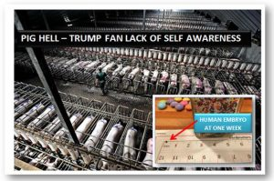 "Trumps ""Trumpeteer"" Fans, USA, USA, USA–Yes they are Free to be Less Self Aware than a Pig…"